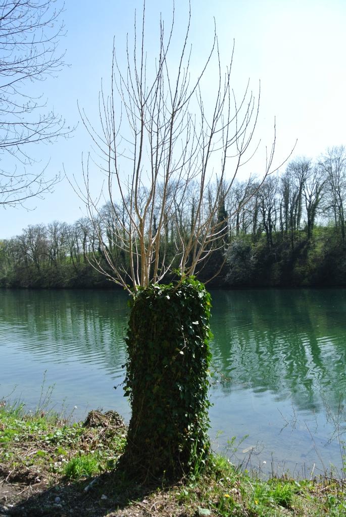 Rheinuferweg-13-04-24-164