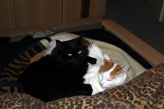 meine Katzen