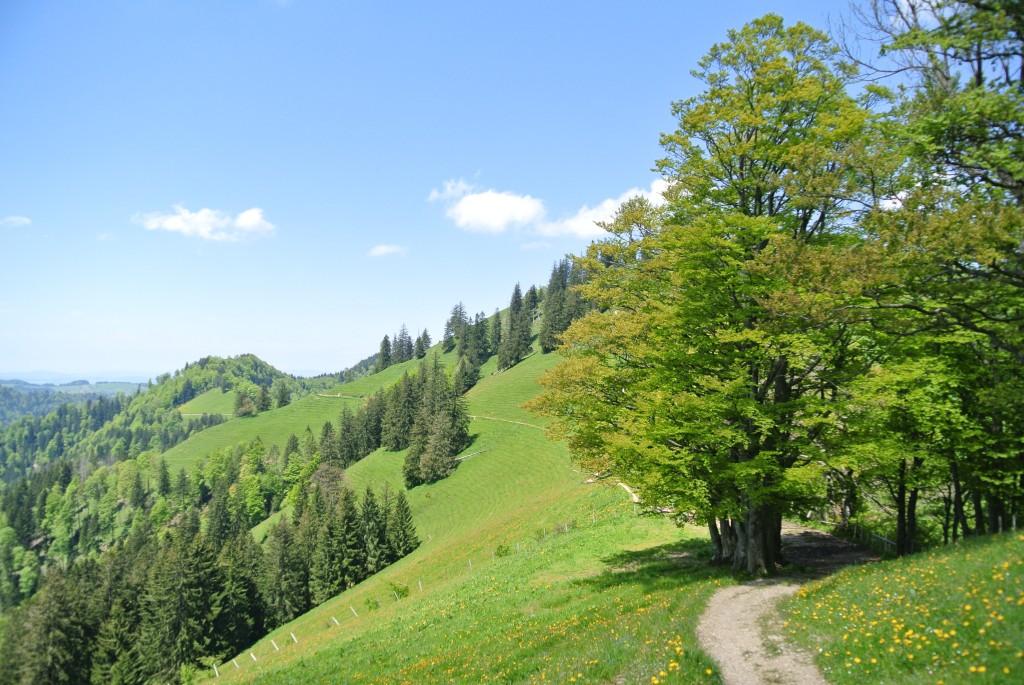 Steg-Wattwil-13-06-06-036