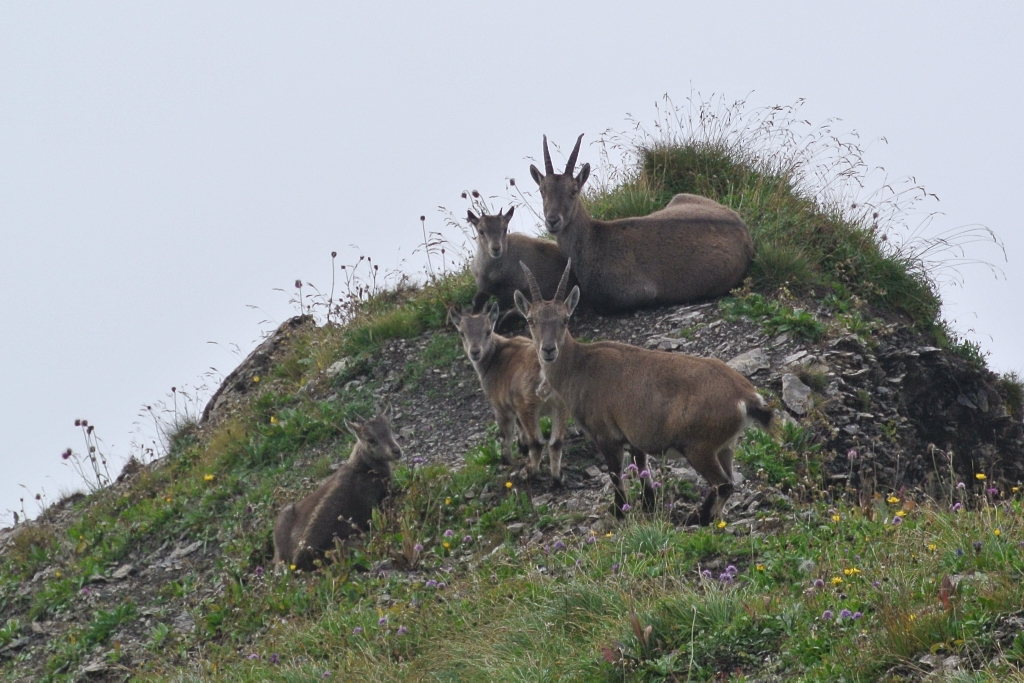 2014-09-11-180_BrienzerRothorn