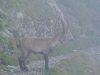 2014-09-11-111_BrienzerRothorn