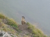 2014-09-11-200_BrienzerRothorn